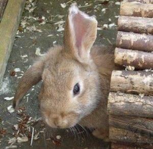 gen_bunny_2