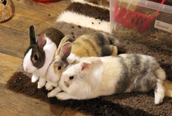 rabbit-group-15_9_14