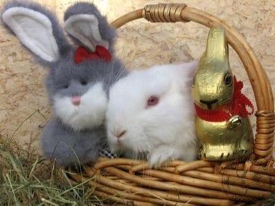gen_easter_bunny_photo