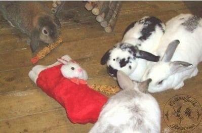 gen_websize_Alison's_bunnies