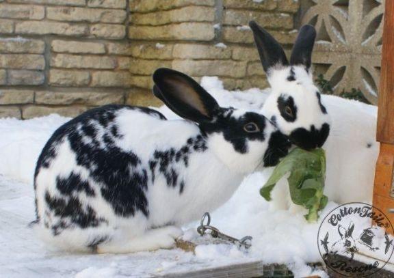 rabbit speed dating uk dating bayan agro industrial corp