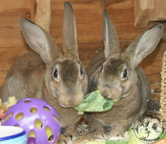Single bunny dating