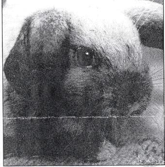 PRESS Cuttings and TV Appearances - CottonTails Rabbit