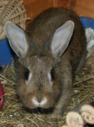 Aggressive Rabbits - CottonTails Rabbit & Guinea Pig