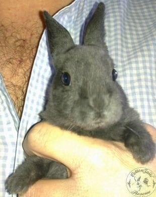 gen_Rabbits_-_4_weeks_2