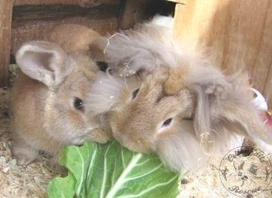 gen_lionheads grooming