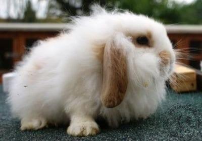 gen_photo_3__fluffy_rabbit_websize