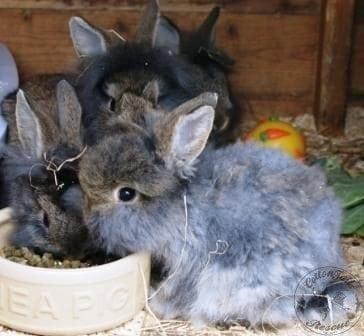 gen_photo_7__clipped_rabbit_websize