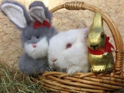 gen_easter_bunny_photo