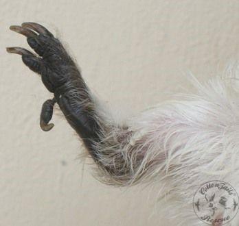 guinea pig care article photo 5