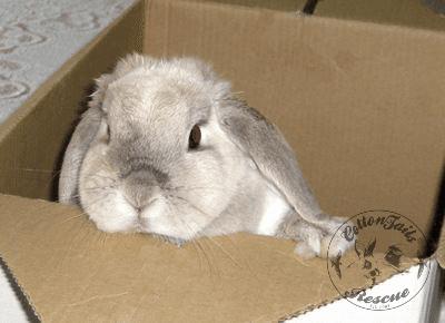 rabbit care 1 12.4.13