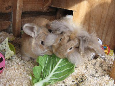 rabbit care 14 12.4.13