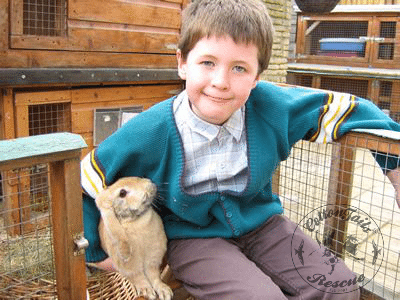 rabbit care 2 12.4.13