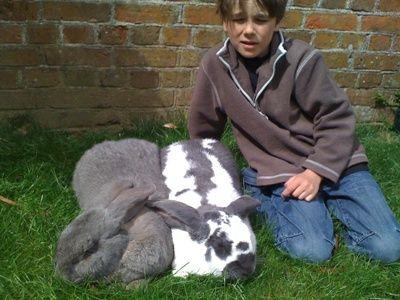 rabbit care 20 12.4.13