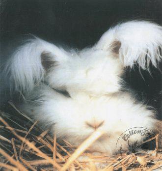 rabbit care 22 12.4.13