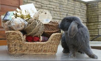 rabbit care 24 12.4.13