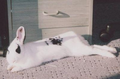 rabbit care 27    12.4.13
