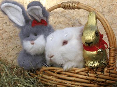 rabbit care 3 12.4.13