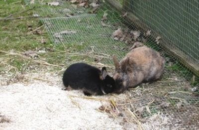 rabbit care 38 12.4.13