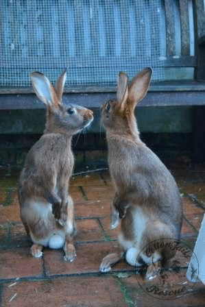 rabbit care 4 12.4.13