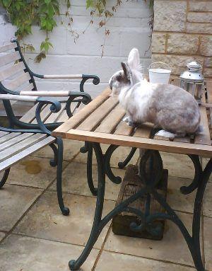 rabbit care 41 12.4.13
