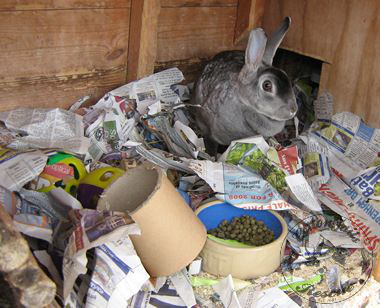 rabbit care 45 12.4.13