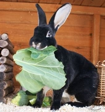 rabbit care 48 12.4.13