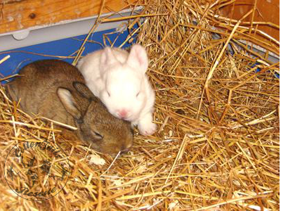 rabbit care 49 12.4.13