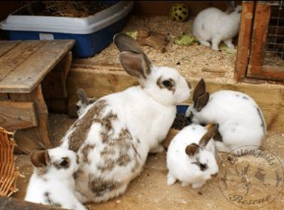 rabbit care 50 12.4.13