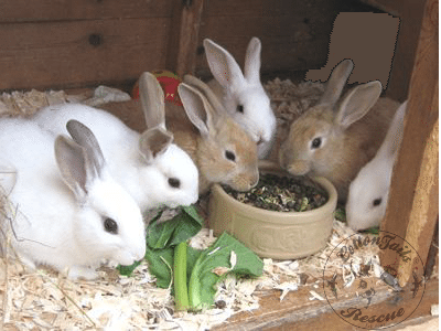 rabbit care 51 12.4.13