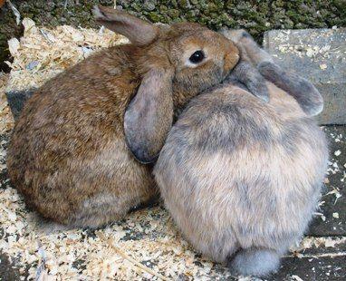 rabbit care 52 12.4.13