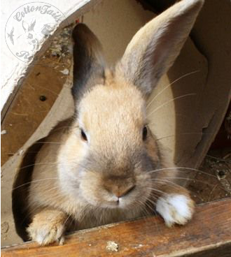rabbit care 53 12.4.13