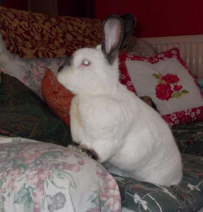 rabbit care 56 12.4.13