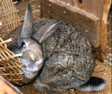 rabbit care 58 12.4.13