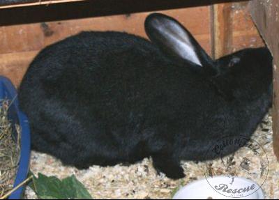 rabbit care 59 12.4.13