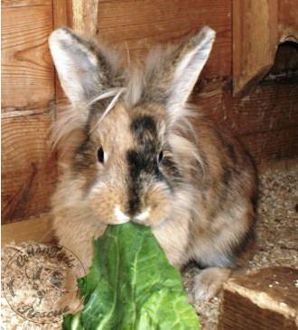 rabbit care 79 watermark 12.4.13