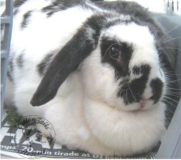 rabbit care 80 watermark 12.4.13