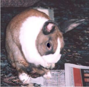 rabbit care 81 watermark 12.4.13