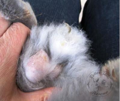 rabbit care 83 watermark 12.4.13
