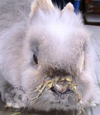rabbit care 85 watermark 12.4.13
