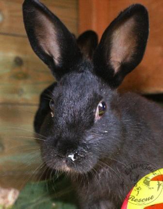 rabbit care 86 watermark 12.4.13