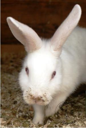 rabbit care 87 watermark 12.4.13