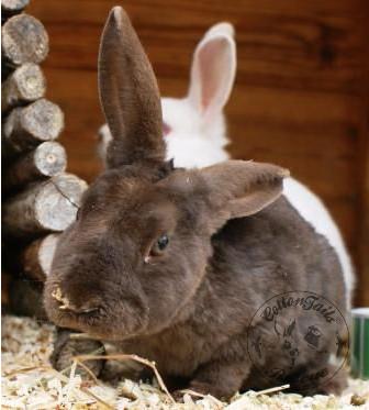 rabbit care 88 watermark 12.4.13