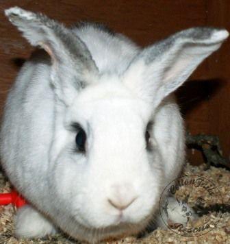 rabbit care 90 watermark 12.4.13
