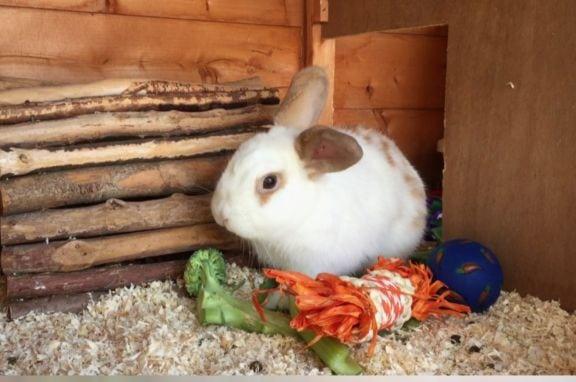 rabbit dating website