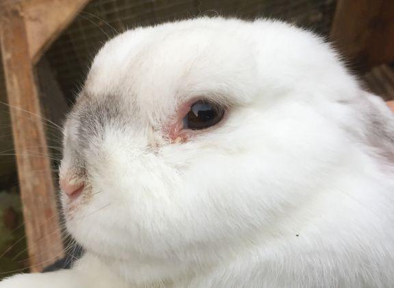 RABBIT CARE - CottonTails Rabbit & Guinea Pig